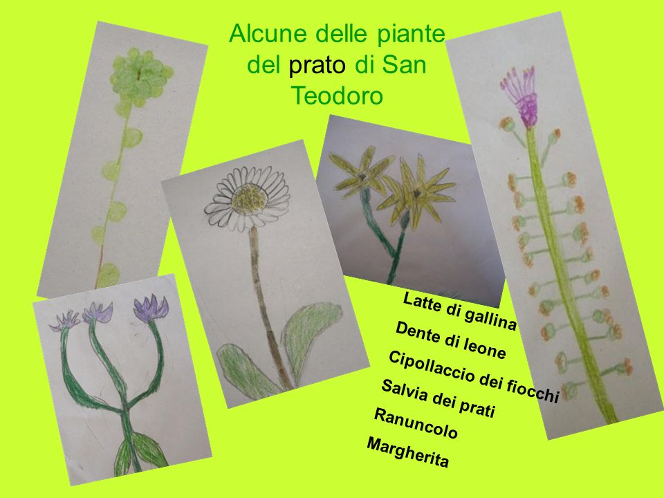 Alcune delle piante del prato di San Teodoro