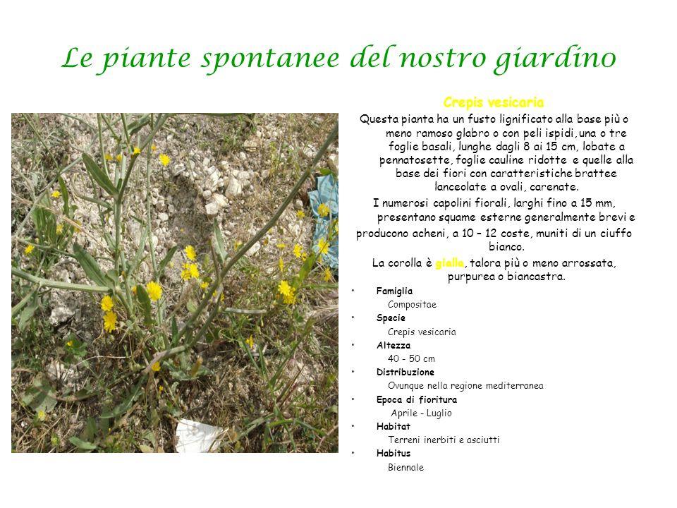 Le piante spontanee del nostro giardin0