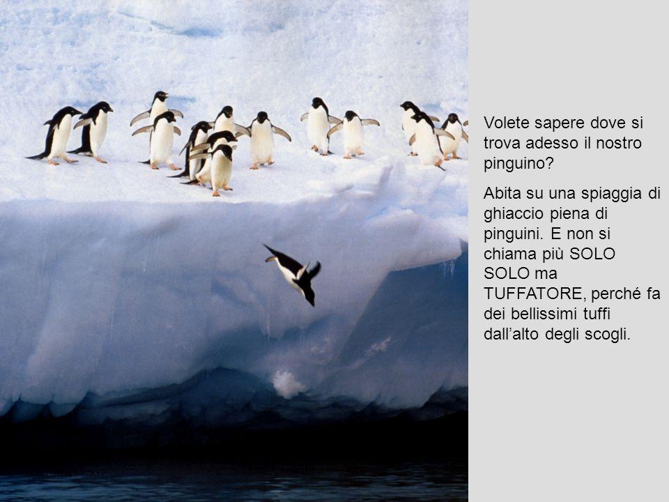 Volete sapere dove si trova adesso il nostro pinguino