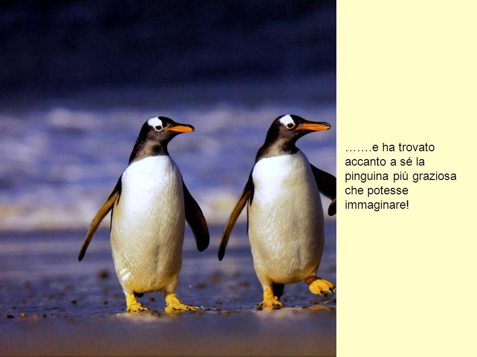 …….e ha trovato accanto a sé la pinguina più graziosa che potesse immaginare!