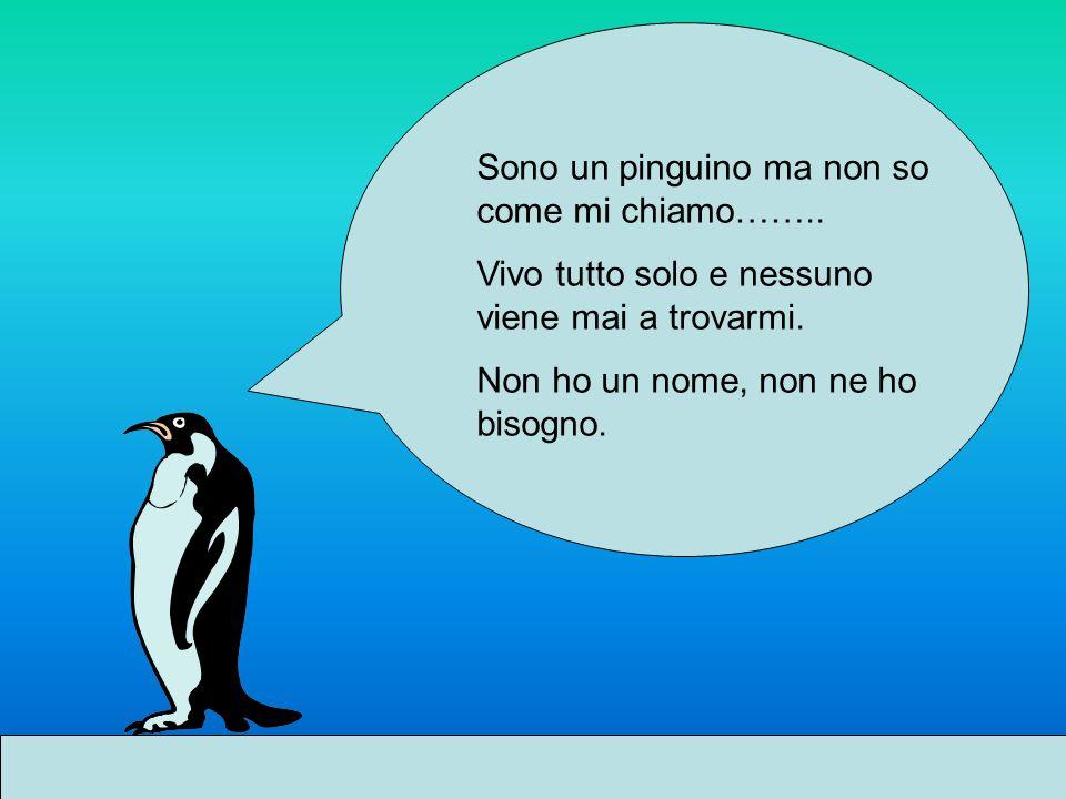 Sono un pinguino ma non so come mi chiamo……..