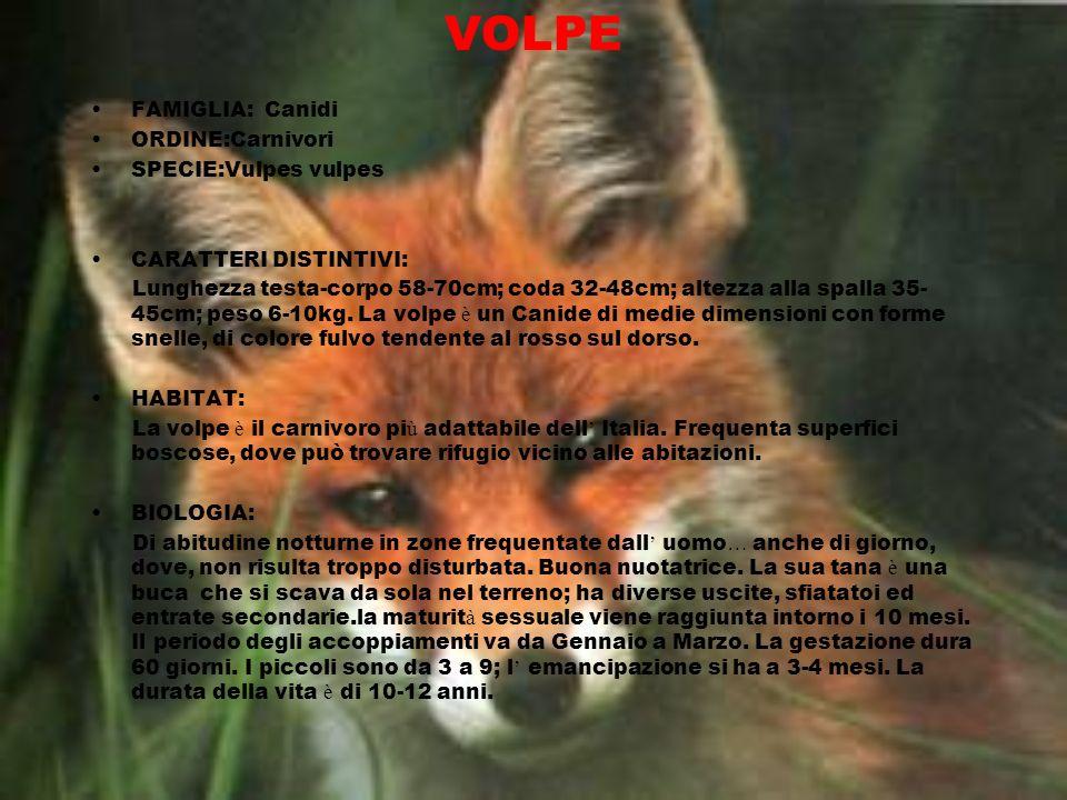 VOLPE FAMIGLIA: Canidi ORDINE:Carnivori SPECIE:Vulpes vulpes