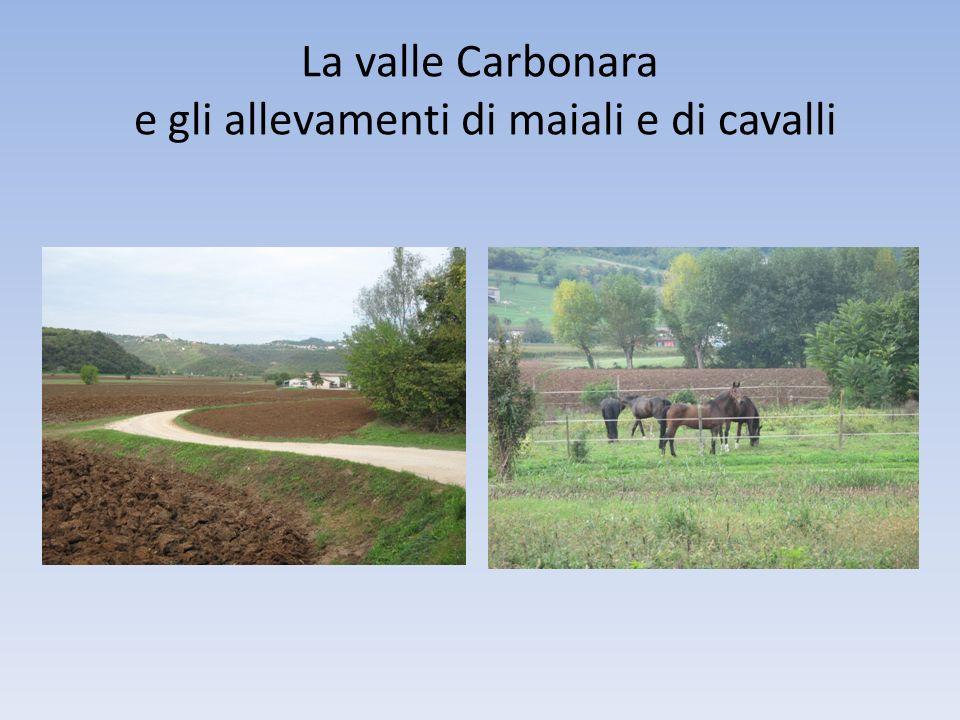 La valle Carbonara e gli allevamenti di maiali e di cavalli