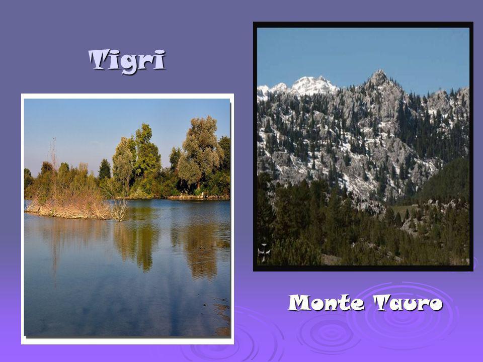 Tigri Monte Tauro