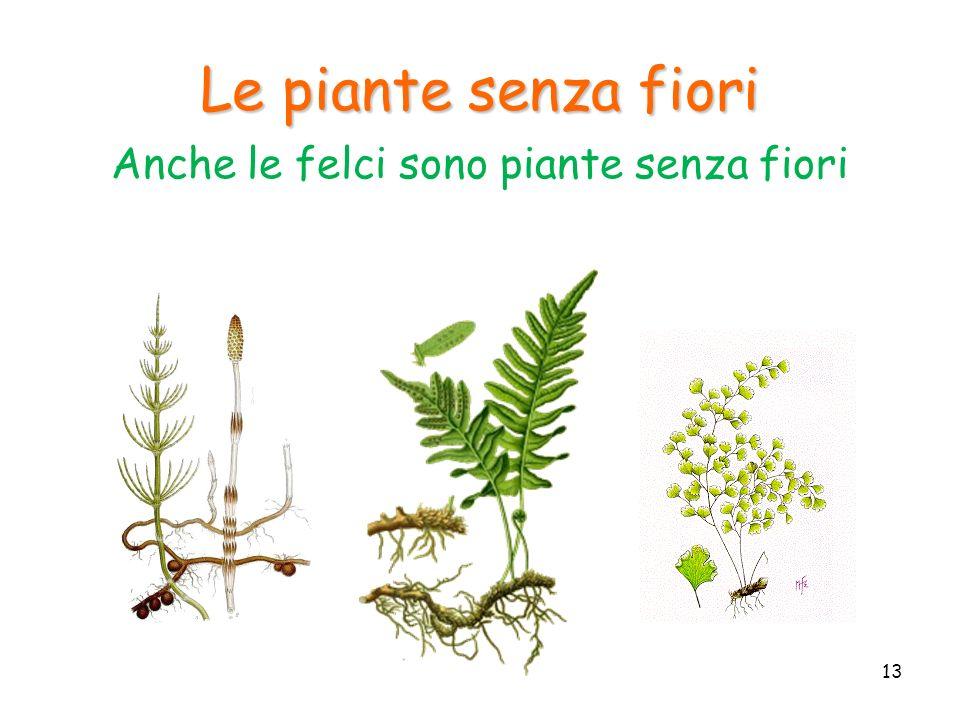 Anche le felci sono piante senza fiori
