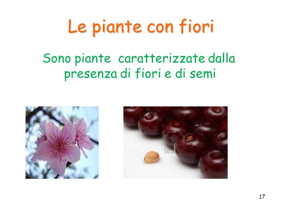 Sono piante caratterizzate dalla presenza di fiori e di semi