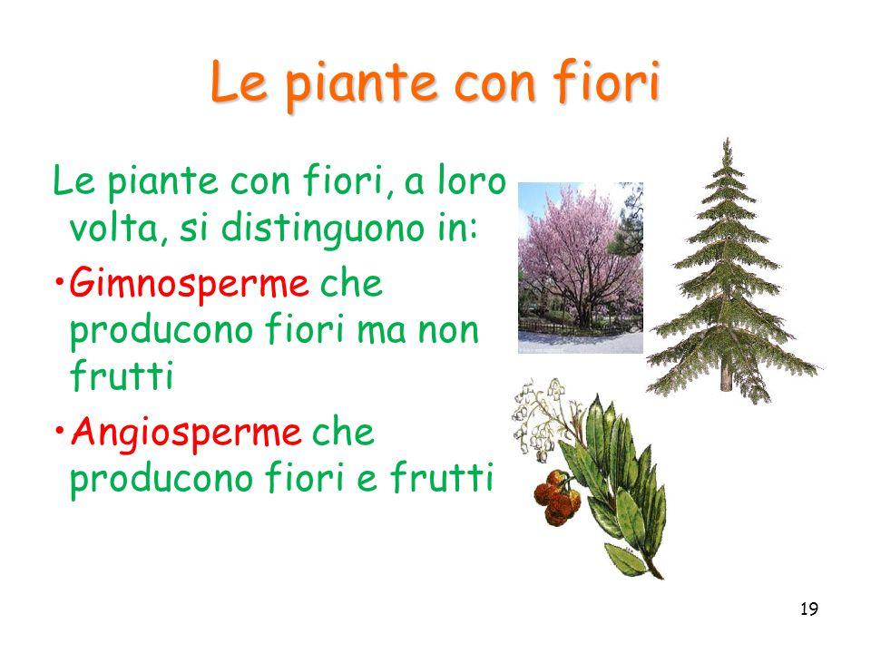 Le piante con fiori Le piante con fiori, a loro volta, si distinguono in: Gimnosperme che producono fiori ma non frutti.