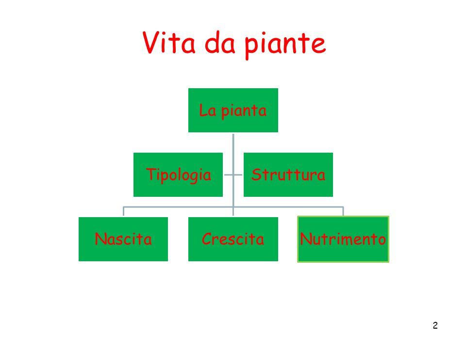 Vita da piante La pianta Nascita Crescita Nutrimento Tipologia