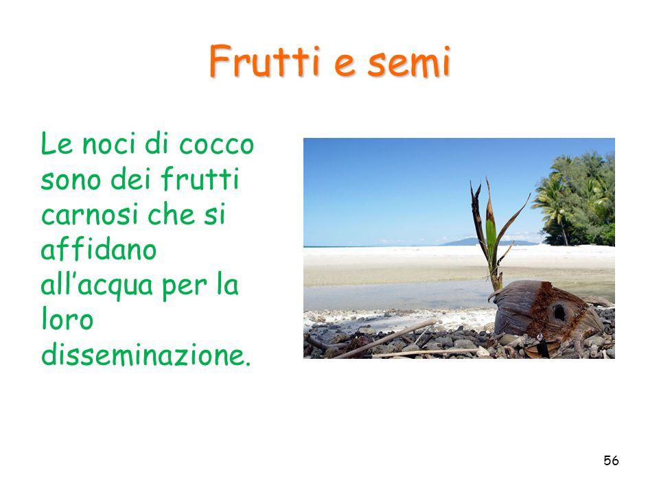 Frutti e semi Le noci di cocco sono dei frutti carnosi che si affidano all'acqua per la loro disseminazione.