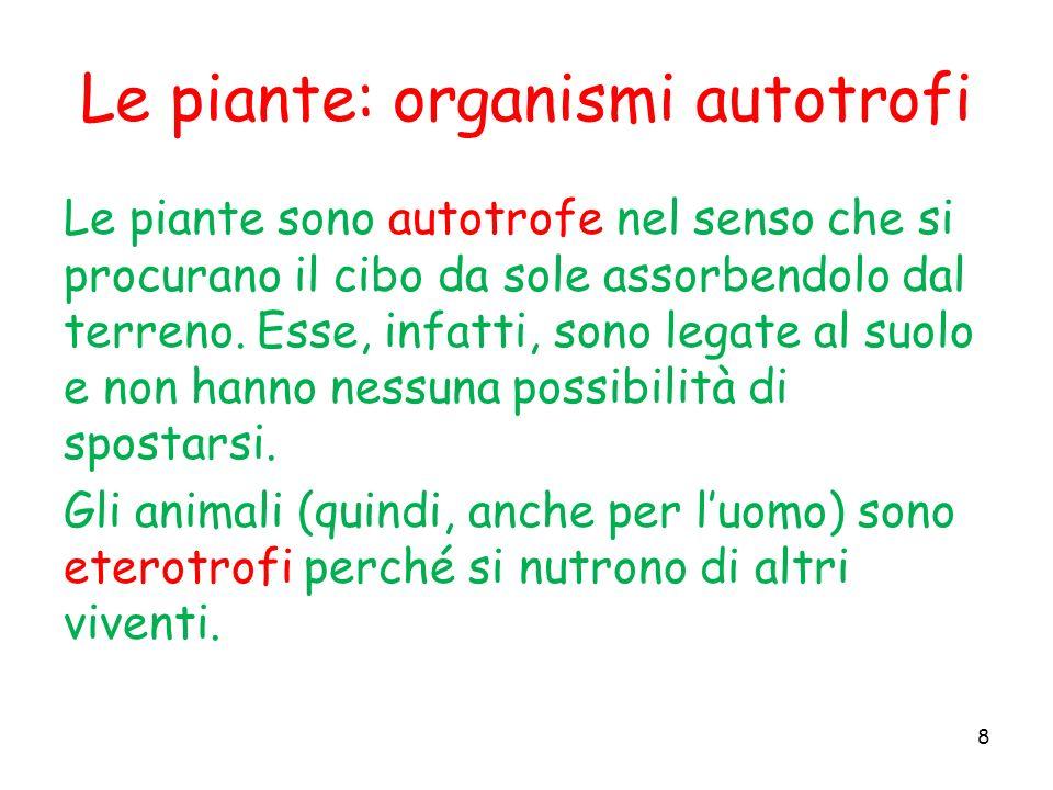 Le piante: organismi autotrofi
