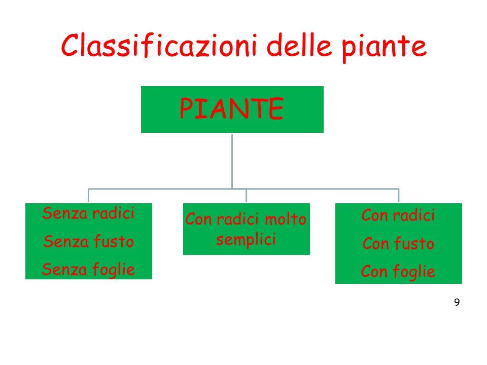 Classificazioni delle piante