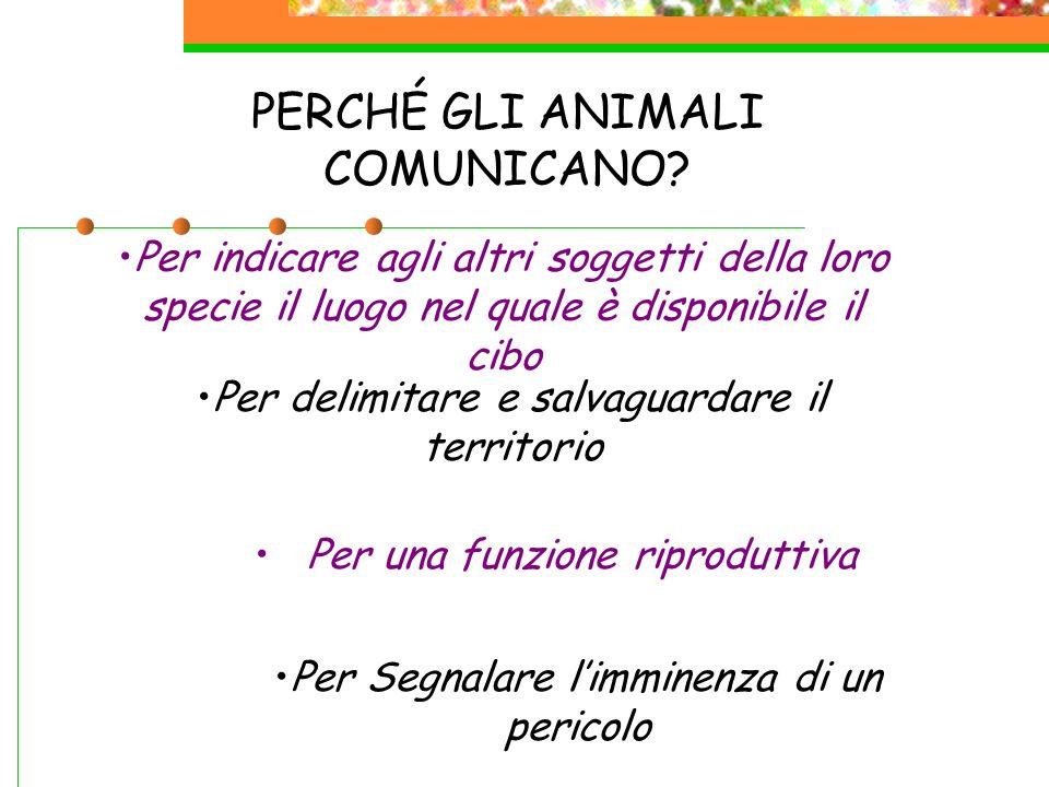PERCHÉ GLI ANIMALI COMUNICANO