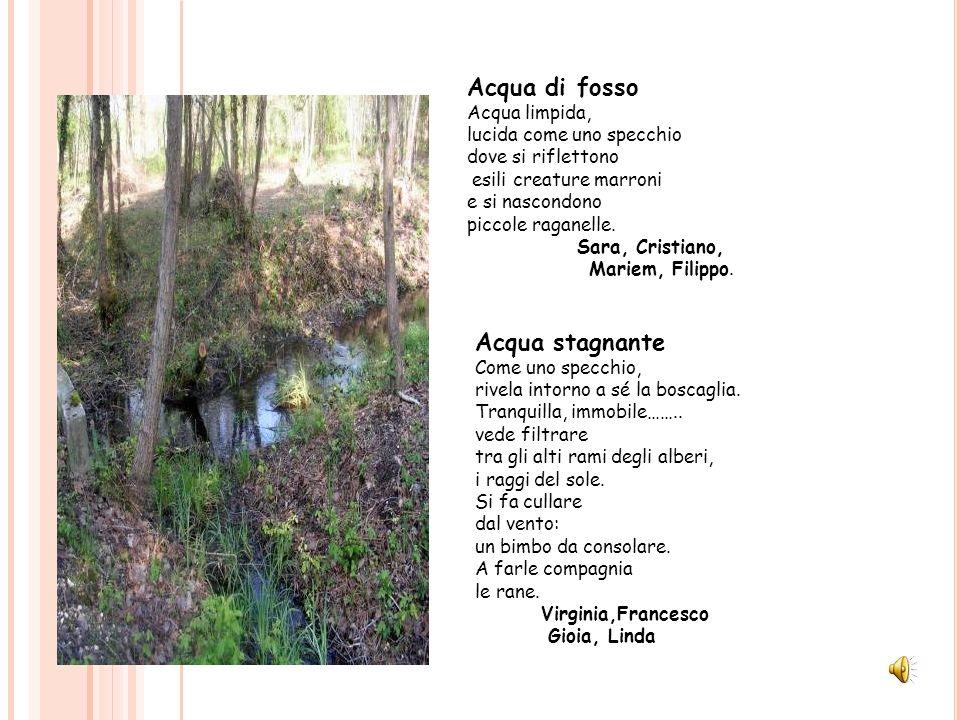 Acqua di fosso Acqua stagnante Acqua limpida, lucida come uno specchio