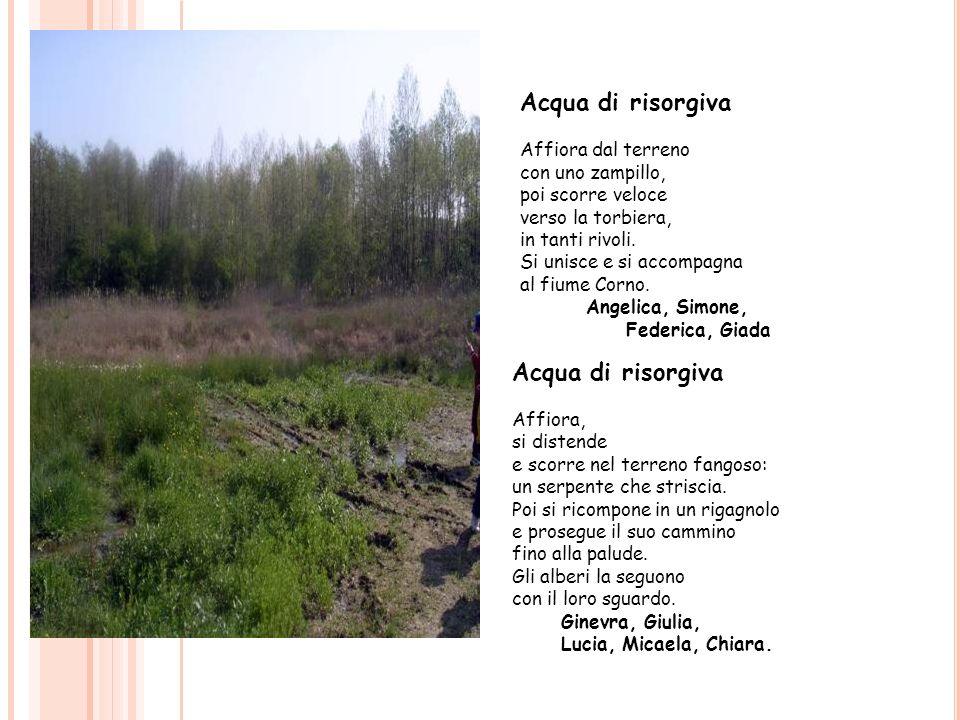 Acqua di risorgiva Acqua di risorgiva Affiora dal terreno