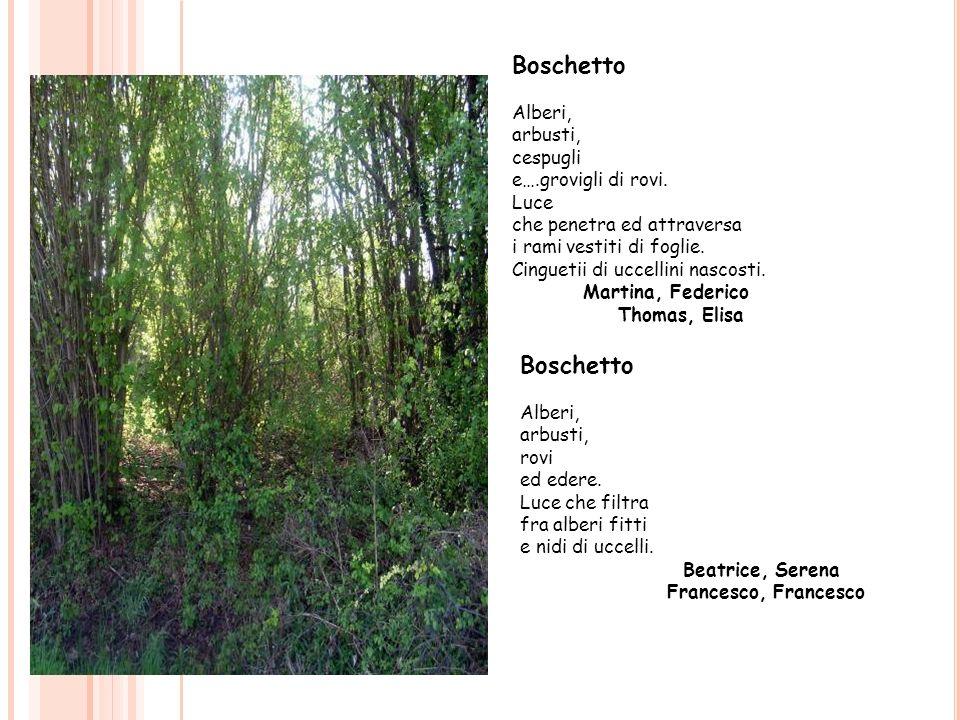 Boschetto Boschetto Alberi, arbusti, cespugli e….grovigli di rovi.