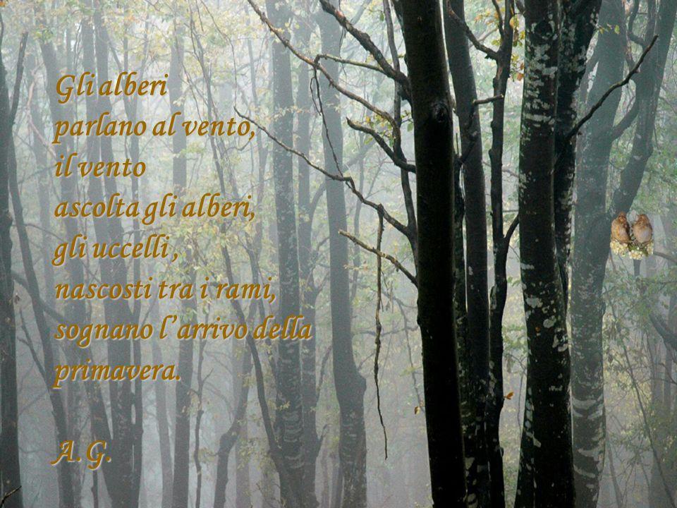 Gli alberi parlano al vento, il vento. ascolta gli alberi, gli uccelli , nascosti tra i rami, sognano l'arrivo della primavera.