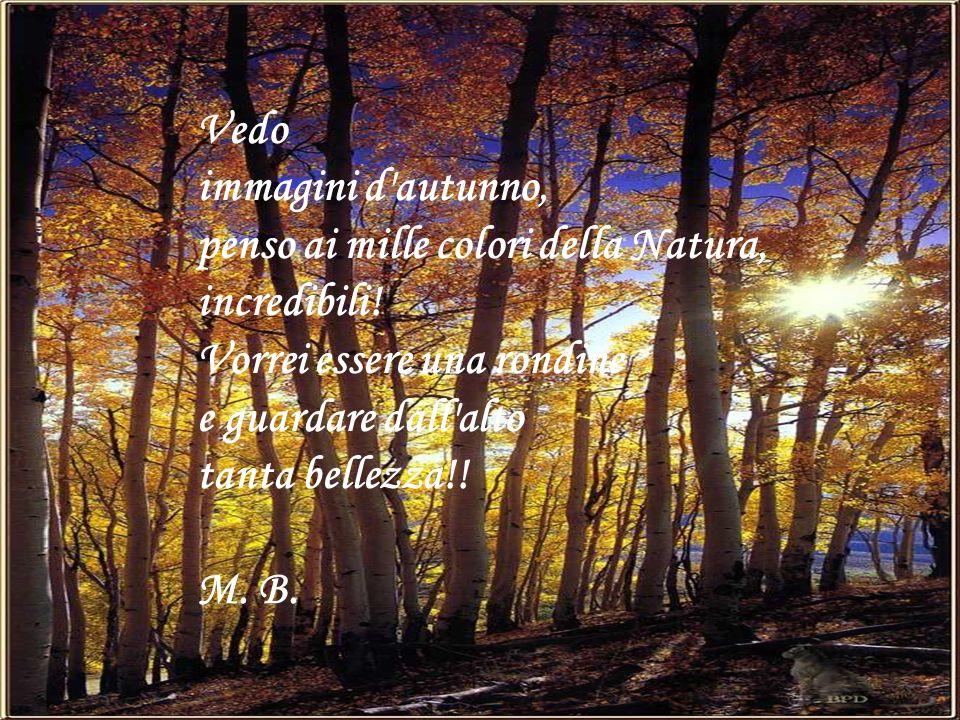 Vedo immagini d autunno, penso ai mille colori della Natura, incredibili! Vorrei essere una rondine.