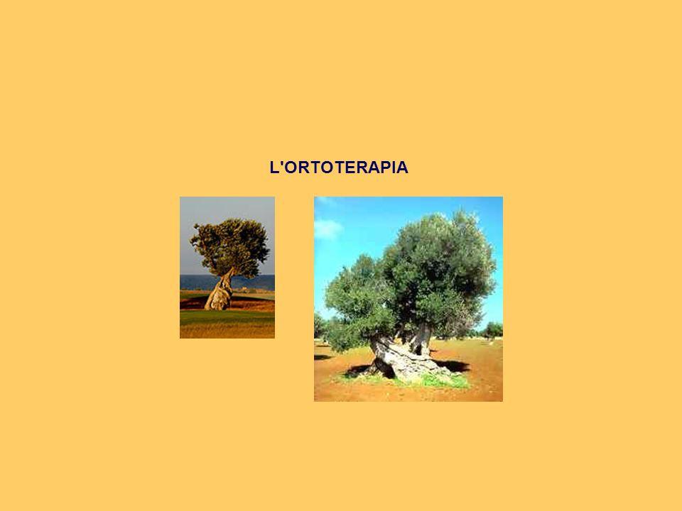 L ORTOTERAPIA