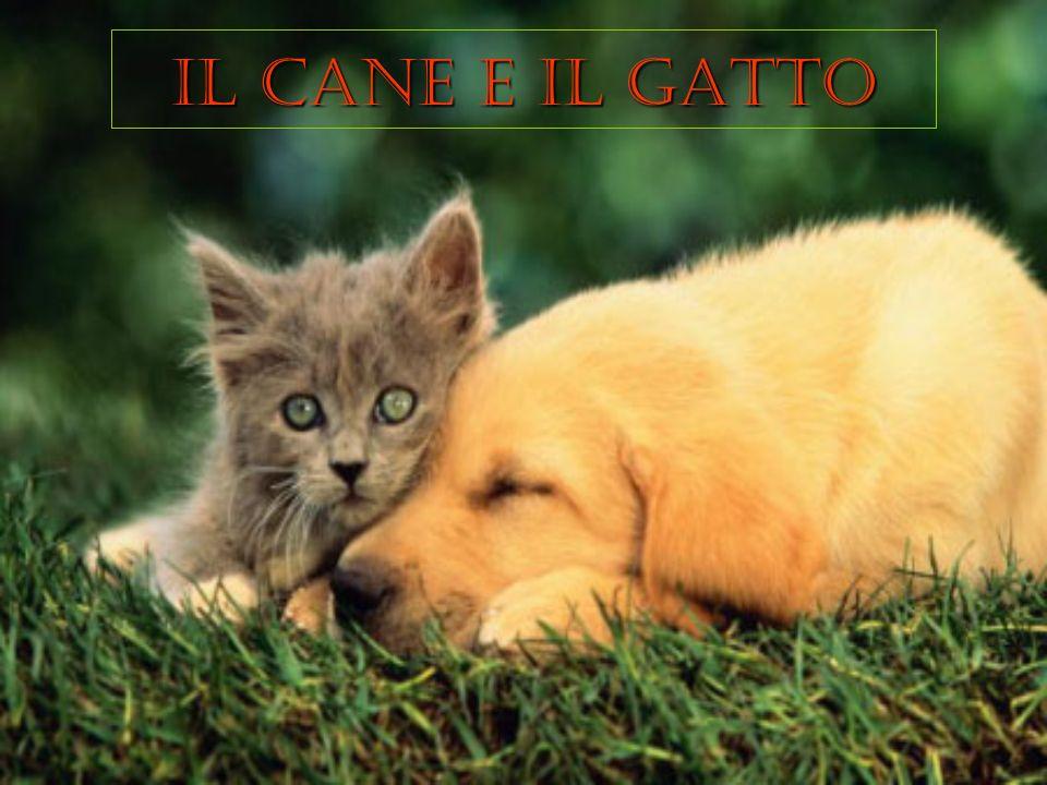IL CANE E IL GATTO