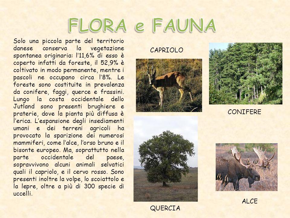 FLORA e FAUNA CAPRIOLO CONIFERE ALCE QUERCIA