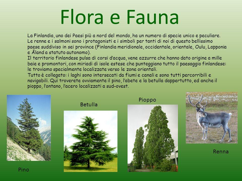 Flora e Fauna Pioppo Betulla Renna Pino