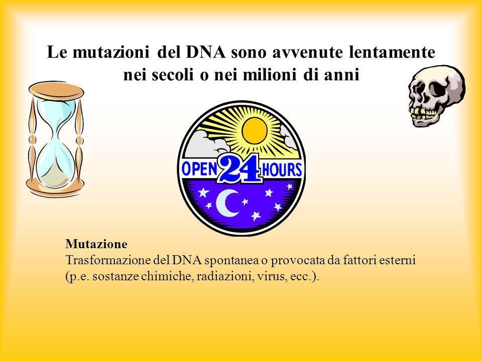 Le mutazioni del DNA sono avvenute lentamente nei secoli o nei milioni di anni