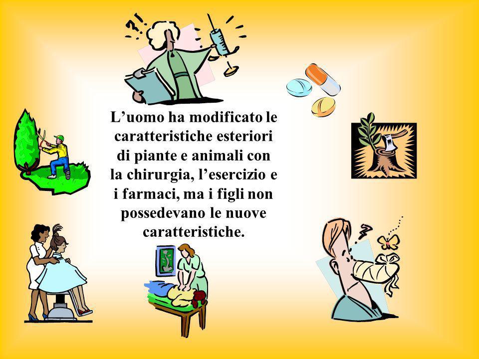 L'uomo ha modificato le caratteristiche esteriori di piante e animali con la chirurgia, l'esercizio e i farmaci, ma i figli non possedevano le nuove caratteristiche.