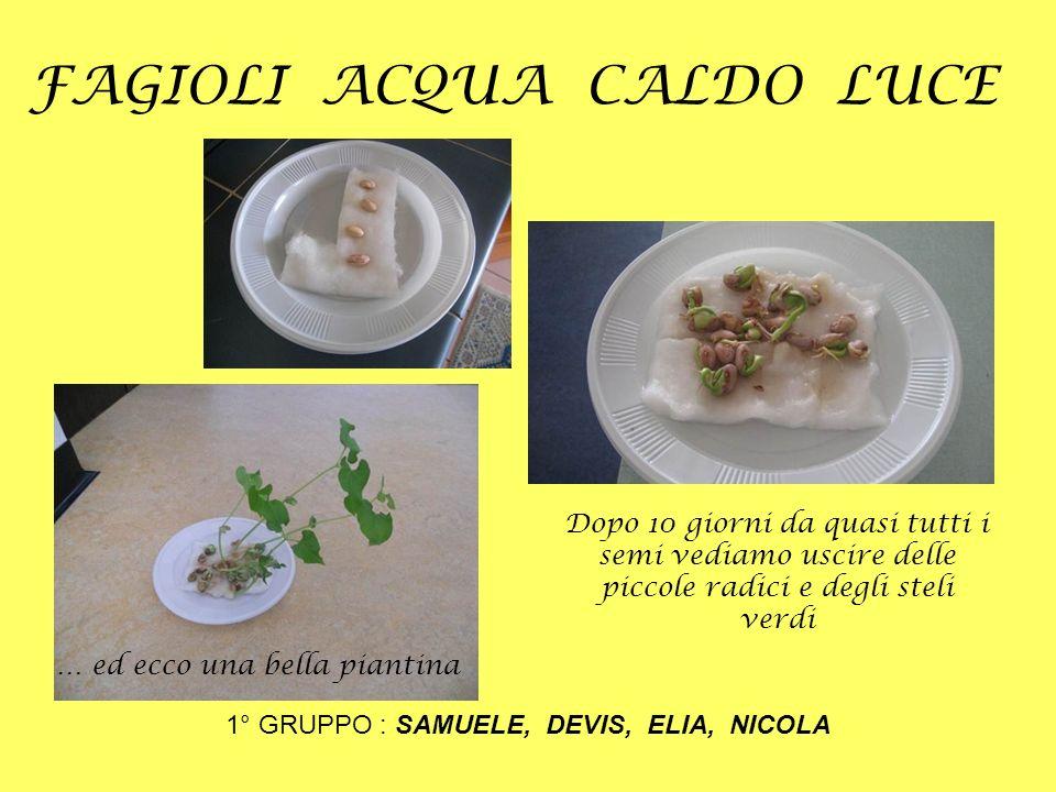 FAGIOLI ACQUA CALDO LUCE