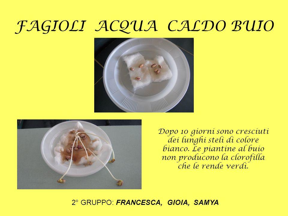 FAGIOLI ACQUA CALDO BUIO