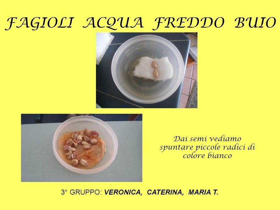 FAGIOLI ACQUA FREDDO BUIO