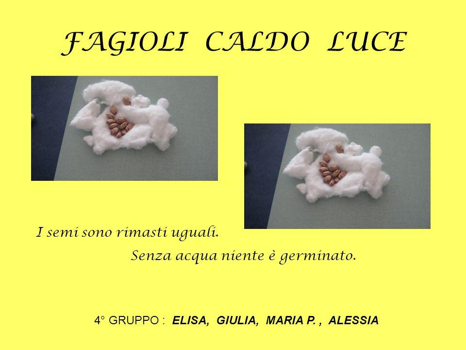 4° GRUPPO : ELISA, GIULIA, MARIA P. , ALESSIA