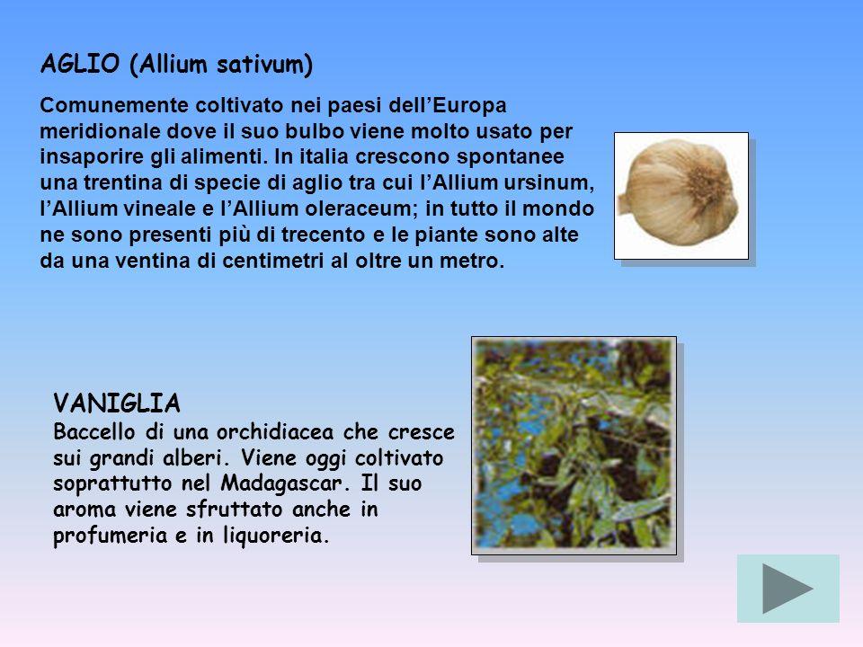 AGLIO (Allium sativum)