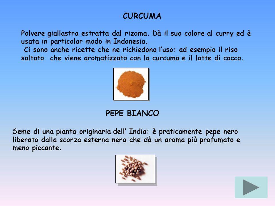 CURCUMA Polvere giallastra estratta dal rizoma. Dà il suo colore al curry ed è usata in particolar modo in Indonesia.