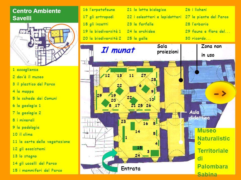 -> Il munat Centro Ambiente Savelli Museo Naturalistico