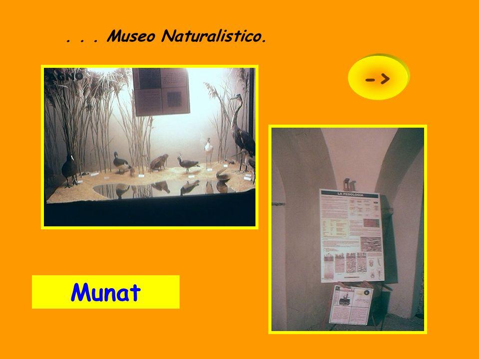. . . Museo Naturalistico. -> Munat