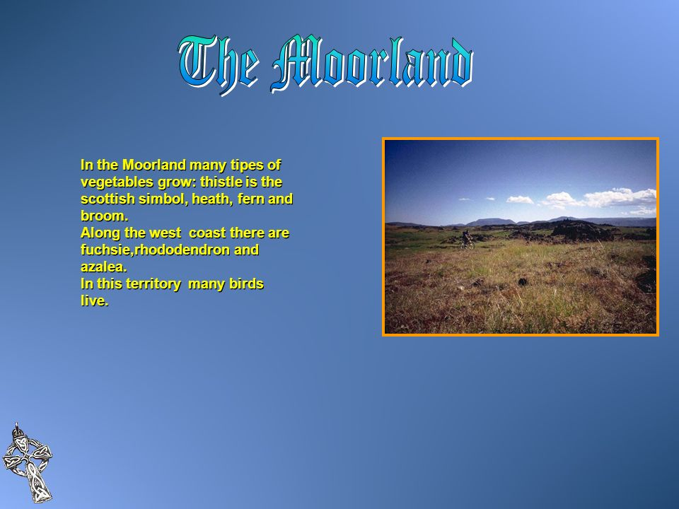 The Moorland