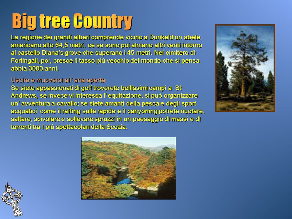 Big tree Country