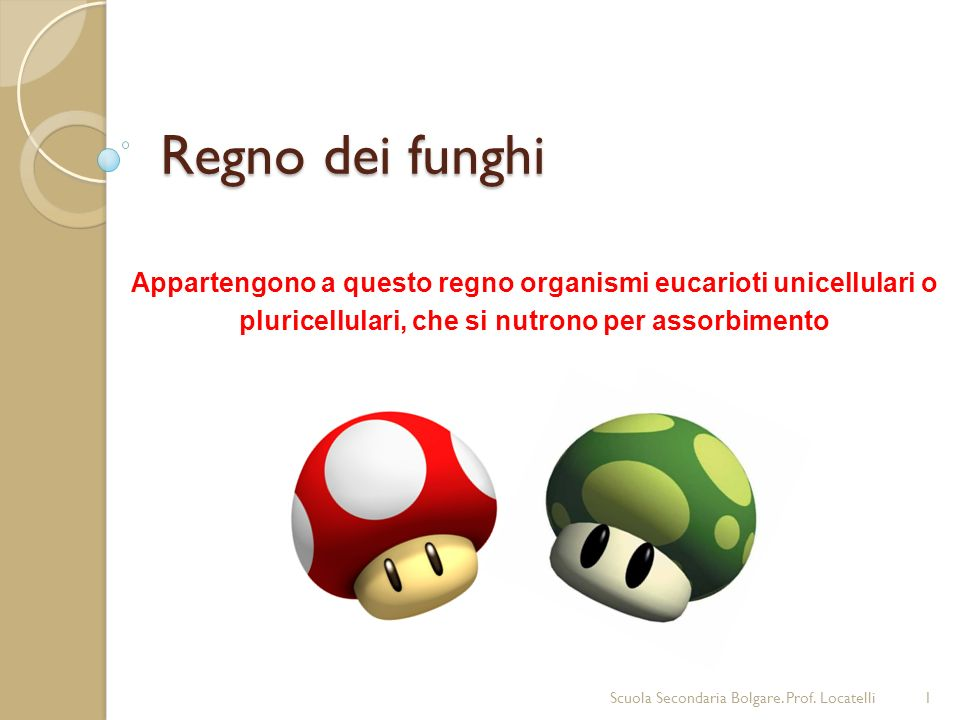 Regno dei funghi Appartengono a questo regno organismi eucarioti unicellulari o pluricellulari, che si nutrono per assorbimento.