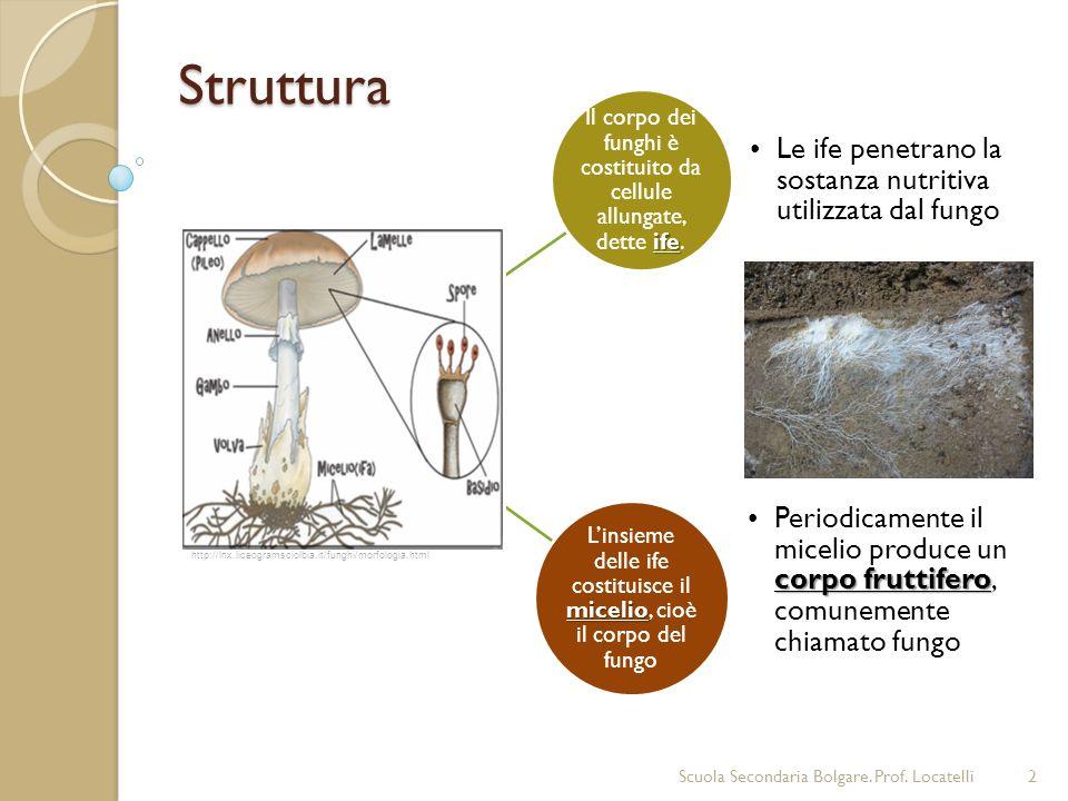 Struttura Il corpo dei funghi è costituito da cellule allungate, dette ife. Le ife penetrano la sostanza nutritiva utilizzata dal fungo.
