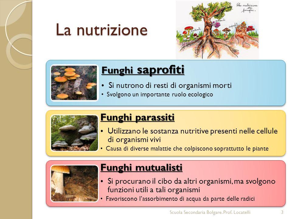 La nutrizione Funghi saprofiti Funghi parassiti Funghi mutualisti