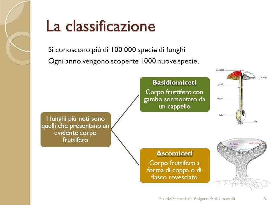 La classificazione Si conoscono più di 100 000 specie di funghi Ogni anno vengono scoperte 1000 nuove specie.