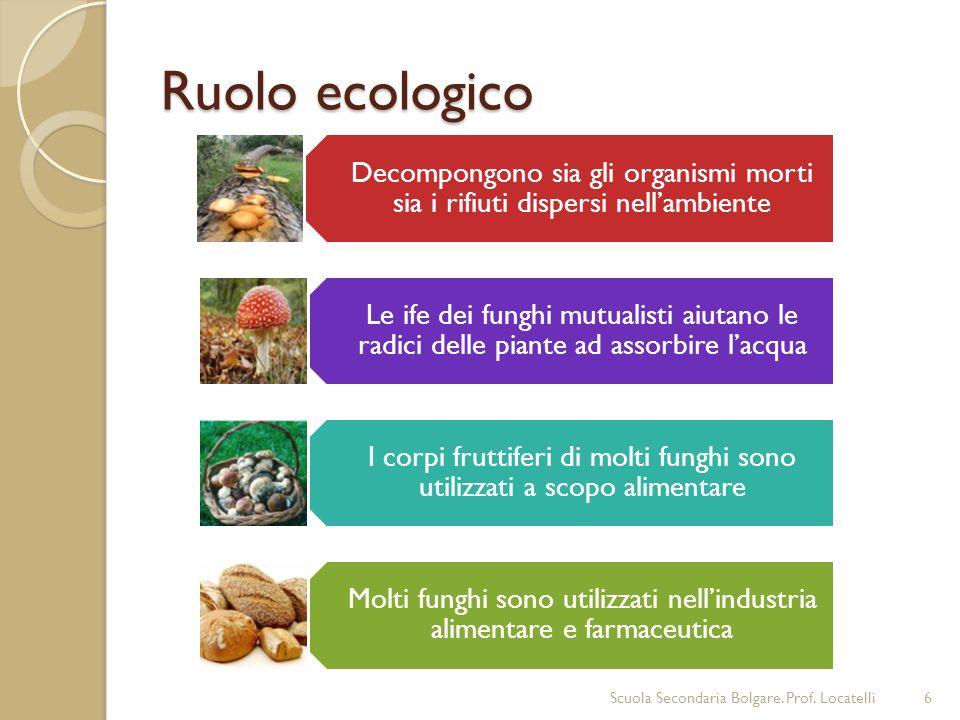 Ruolo ecologico Scuola Secondaria Bolgare. Prof. Locatelli