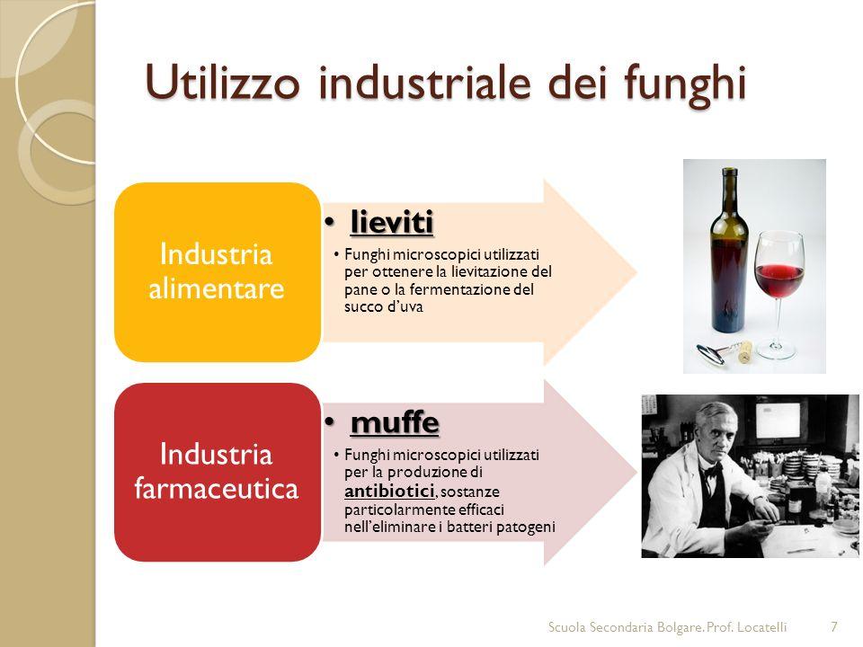 Utilizzo industriale dei funghi