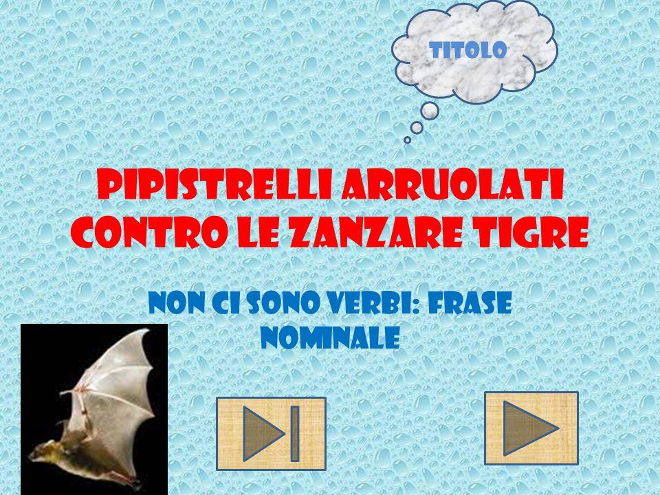 Pipistrelli arruolati contro le zanzare tigre