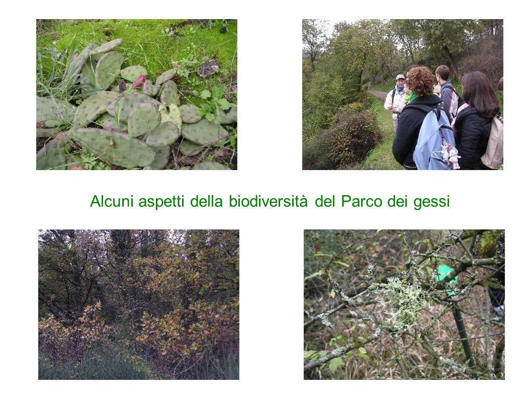 Alcuni aspetti della biodiversità del Parco dei gessi