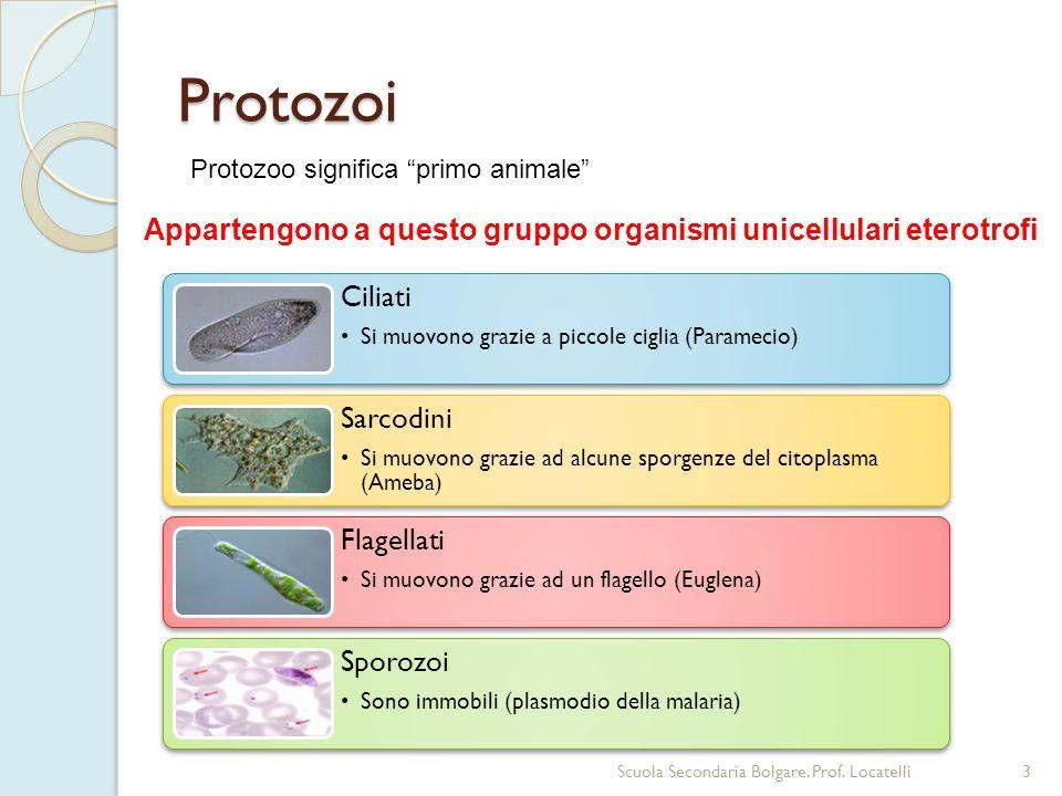 Appartengono a questo gruppo organismi unicellulari eterotrofi
