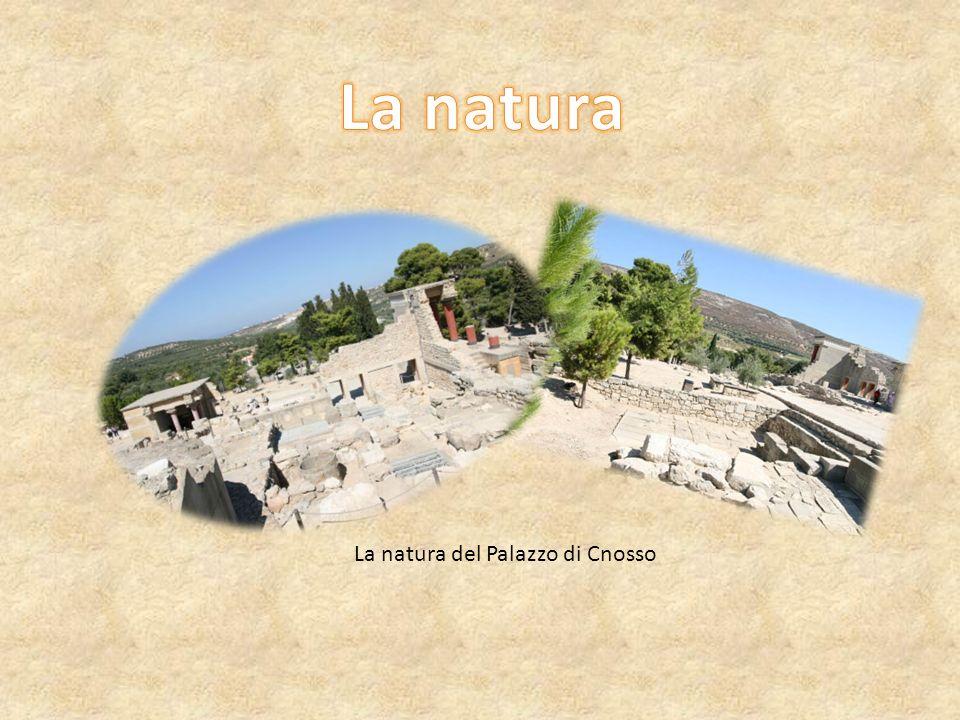 La natura La natura del Palazzo di Cnosso