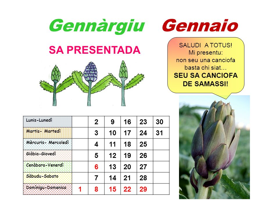 Gennàrgiu Gennaio SA PRESENTADA SEU SA CANCIOFA DE SAMASSI! 2 9 16 23