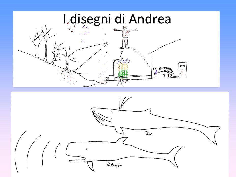 I disegni di Andrea