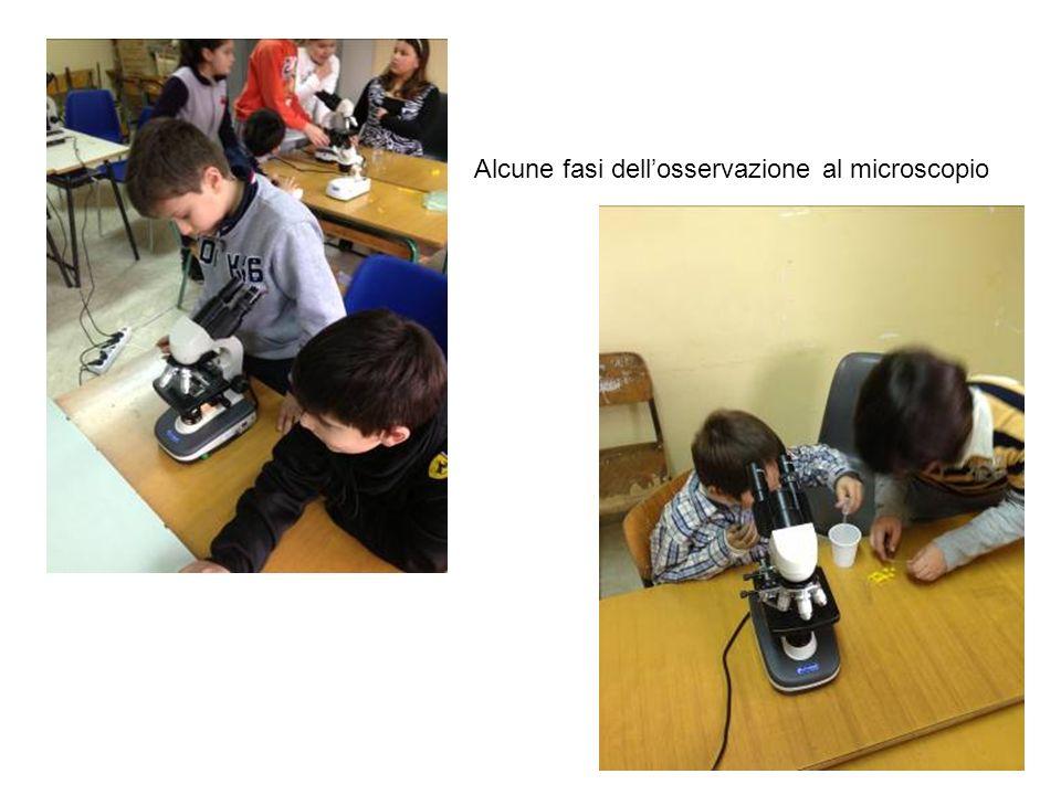 Alcune fasi dell'osservazione al microscopio